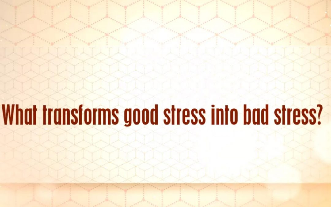 [VIDEO] What is Bad Stress vs. Good Stress?